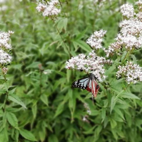 軽井沢の蝶の楽園