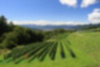 16秋のブドウ畑.JPG