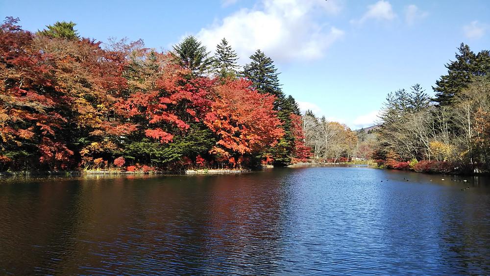 軽井沢雲場池紅葉
