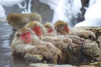 Snow Monkey & Obuse tour