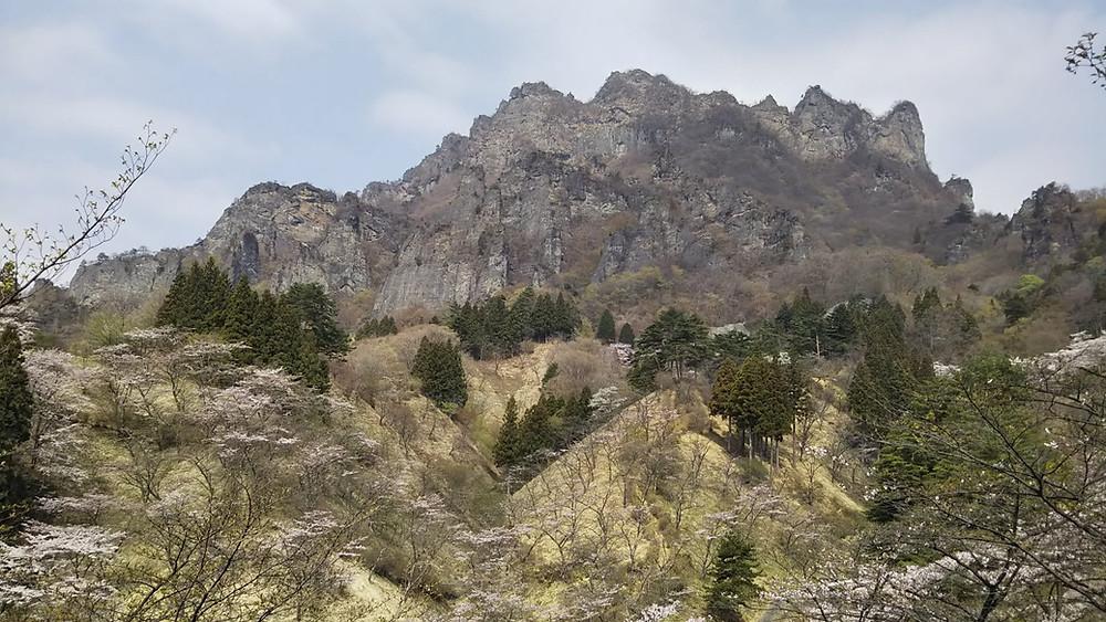 妙義山の桜 さくらの里