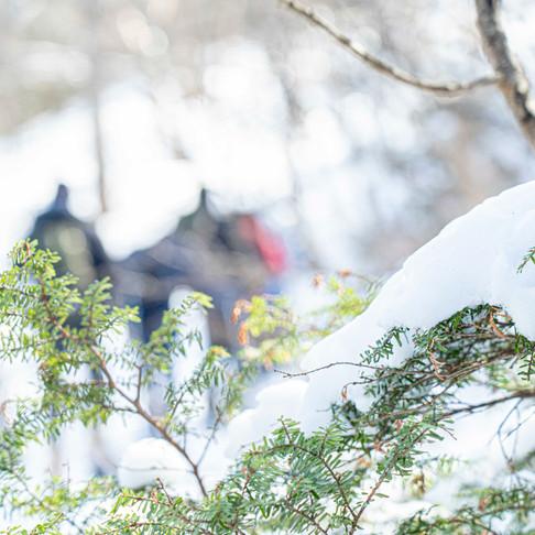 浅間山と北アルプスと富士山の大パノラマ!軽井沢スノーシューツアー