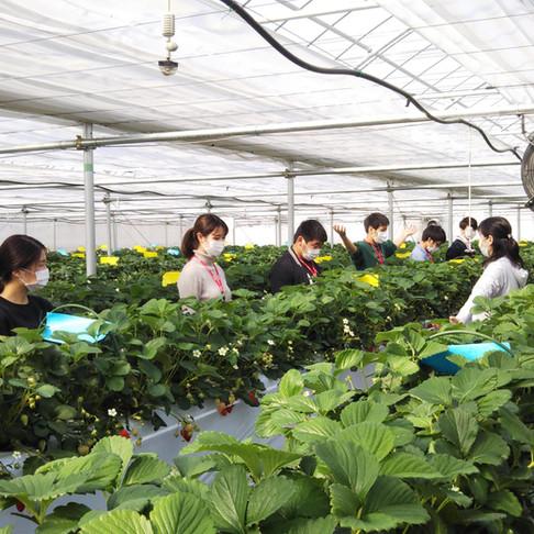 軽井沢での企業研修とチームビルディング