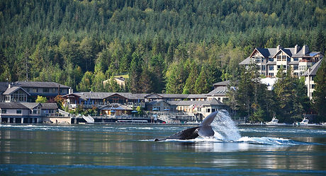 sonora-theplace-whaletail-2220x1200.jpg