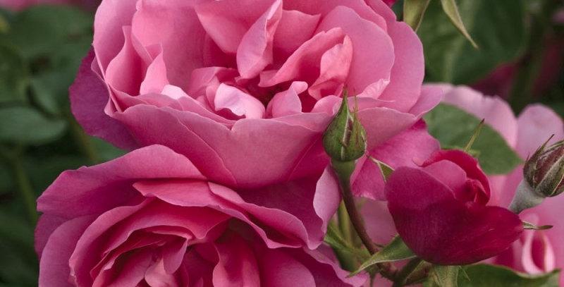 Déborah rosier buisson
