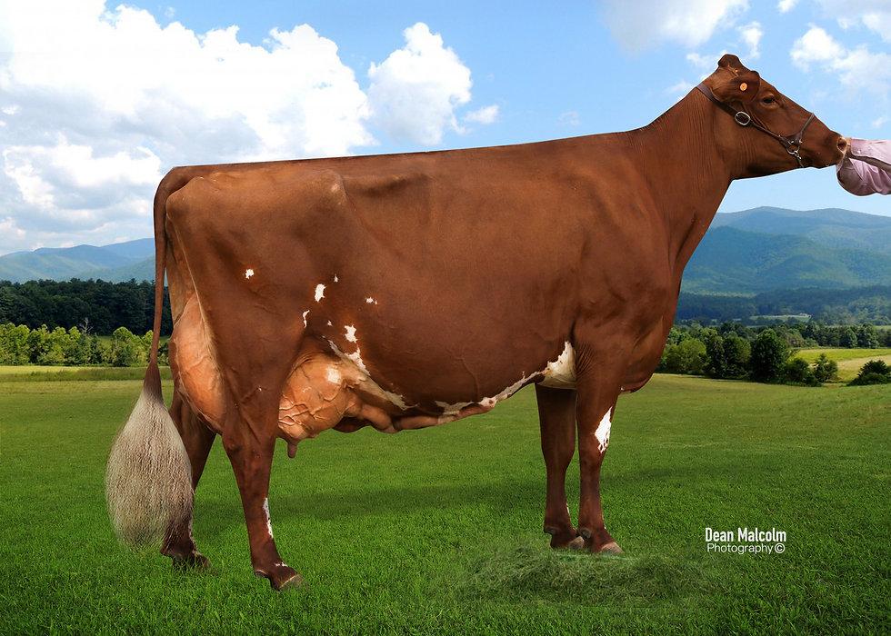 Braelee BP Dairymaid 2.jpg