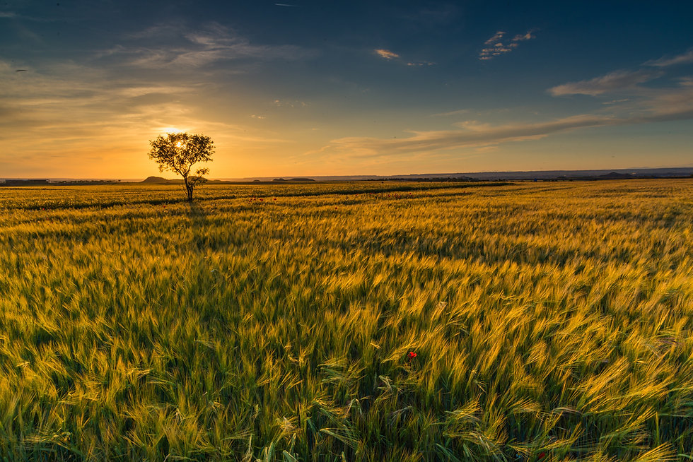 landscape-tree-nature-grass-horizon-mars