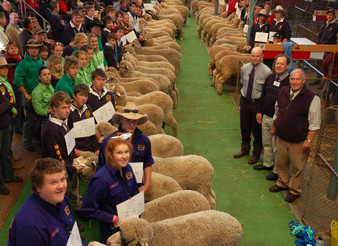 Merino School Wether Competition Celebrates 10 Years