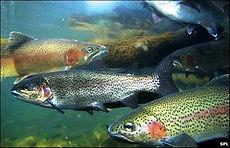 Aquaculture Advantage