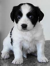 Pup 5.jpg