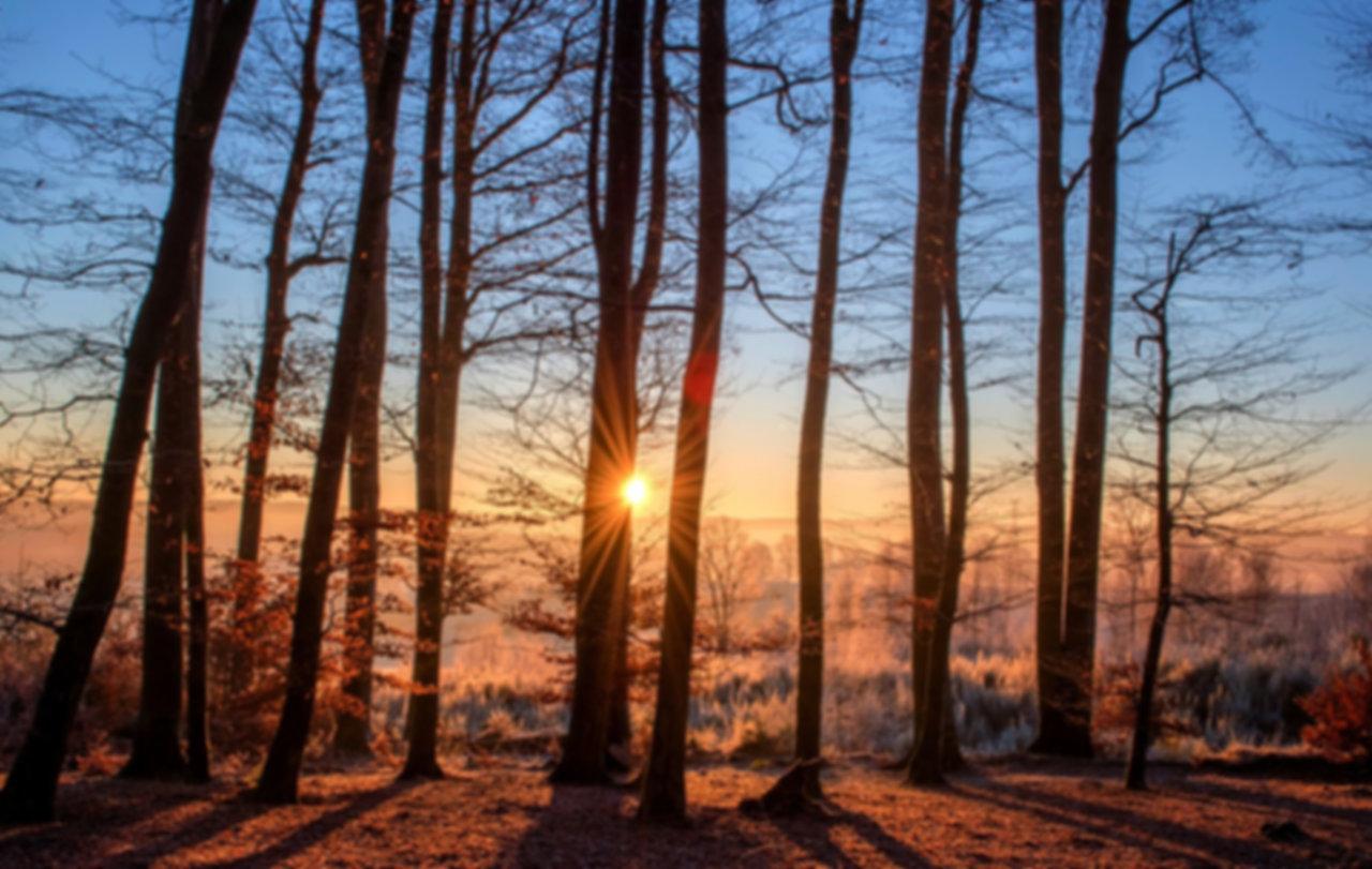 forest-1950402_1280.jpg