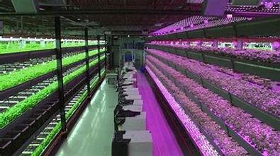 Indoor Farm.2.jpg