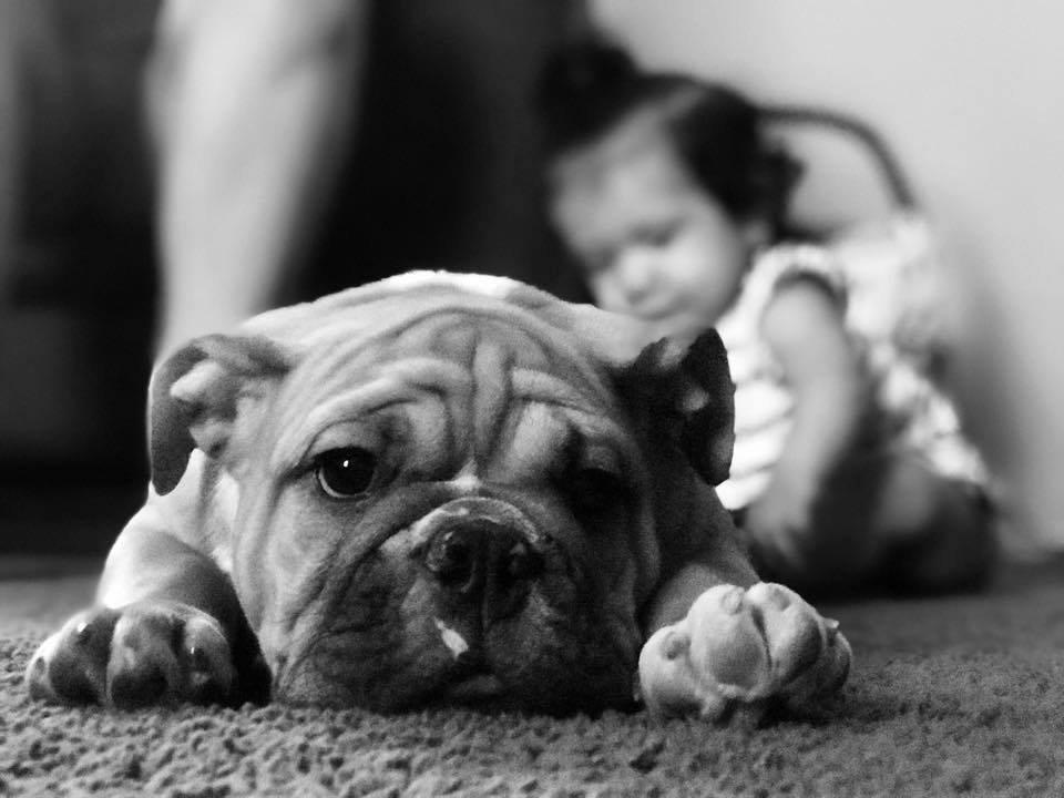 Online Puppy Package