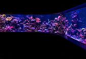 Reef Builders Tank.jpg