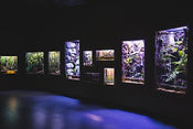 Rainforest Floor.JPG