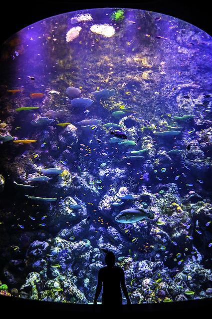 10m Deep Reef Tank.jpg
