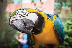 BW-Macaw2.jpg