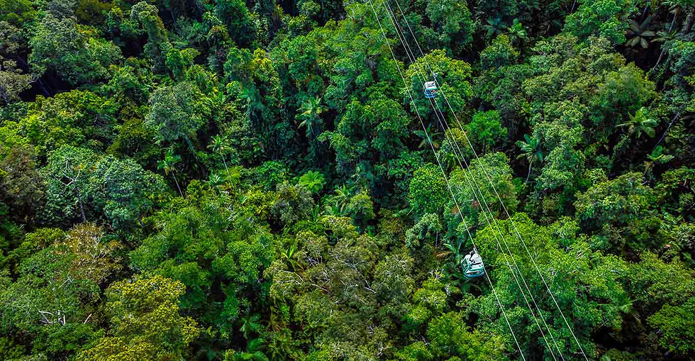 Skyrail_Rainforest_Cableway_Worlds_Oldes