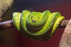 australia_cairns_python.png