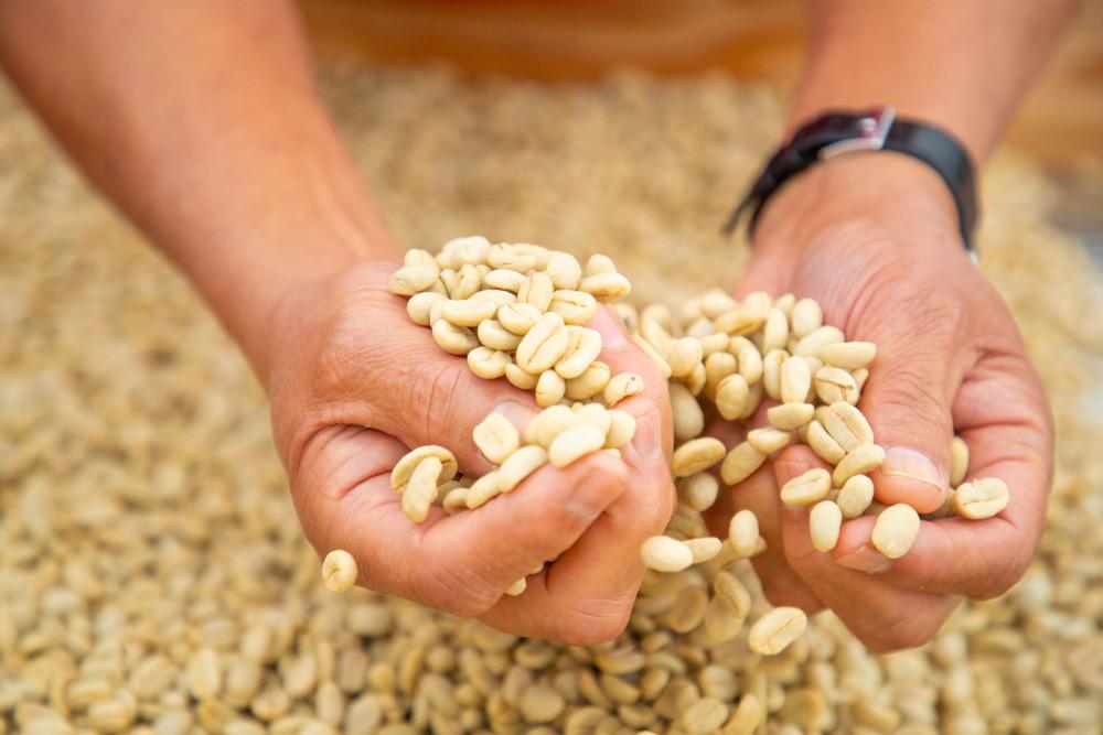 Silvercloud Coffee Beans From Kaʻū,Hawaiʻi