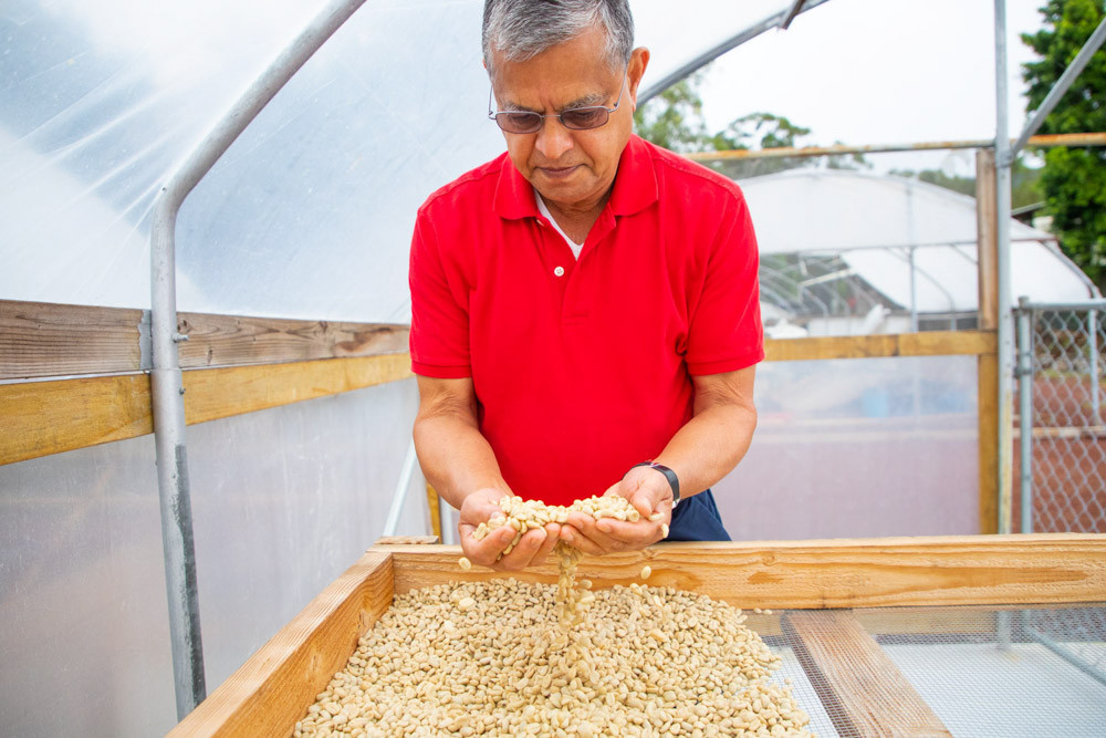 Owner Of Silvercloud Coffee From Kaʻū, Hawaiʻi