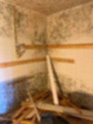 Mold removal .jpg