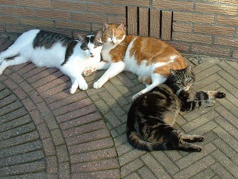Katzenleid