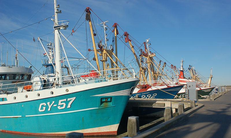 Symbolbild; Fischerboote im Hafen von Harlingen.