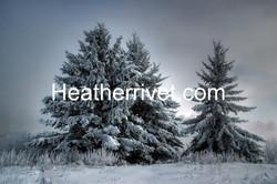 Majestic Winter 2