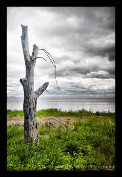 treethumb.jpg