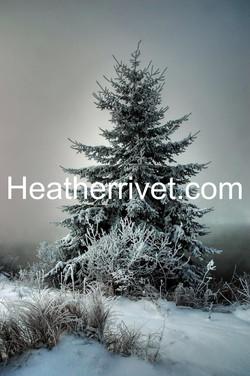 Majestic Winter