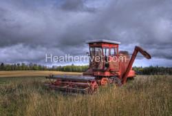 Fall Wheatfields