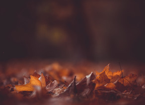 De herfst laat zich proeven in de MalleMolen