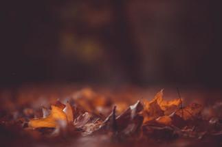 De herfst staat vaak synoniem voor de terugkeer van artrose.