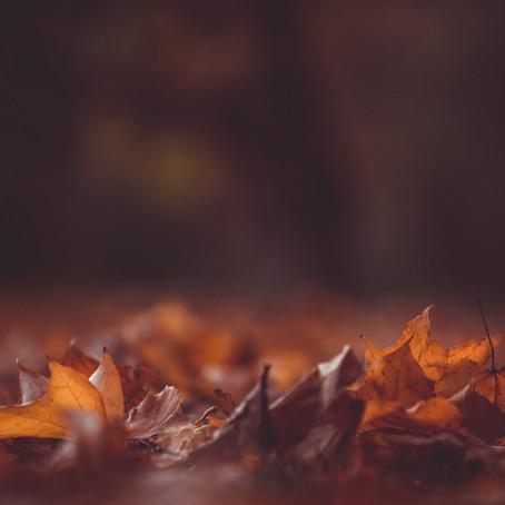 L'autunno è una stagione meravigliosa