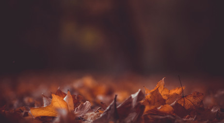 Autumn shedding.