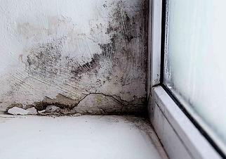 plesen poleg okna.jpeg