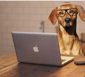 dog computer.png