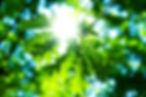 naturaleza-1.jpg