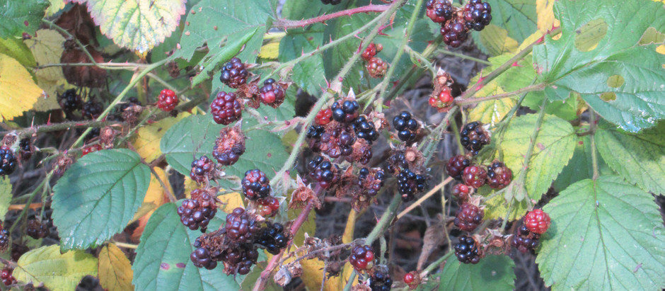 A taste of Autumn on the North Coast 500