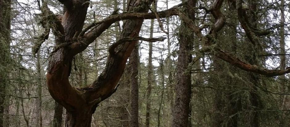 A  Tree Preception