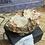 Thumbnail: Opal: Hyalite Water
