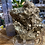 Thumbnail: Pyrite Large Clusters