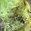 Thumbnail: Flame: Green Opal