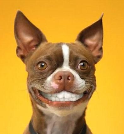 Ультразвуковая чистка зубов собакам
