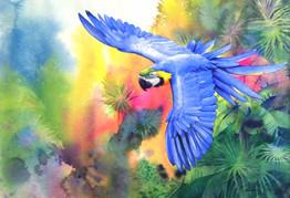 Parrotfinal_edited.jpg