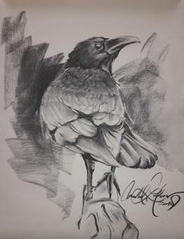 Raven Web.jpg