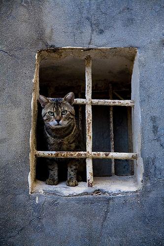 cat-3561766_1920.jpg