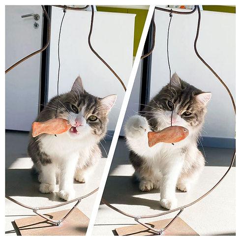Pixel poisson.jpg