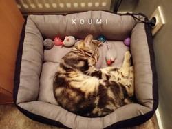 Koumi